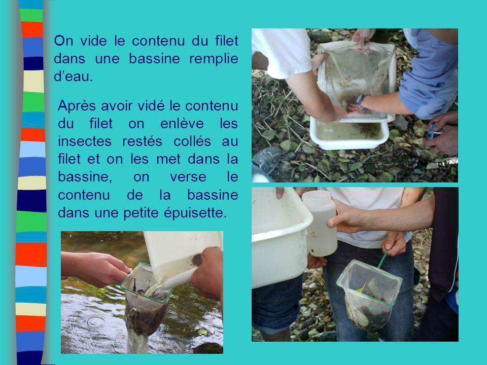 On vide le contenu du filet dans une bassine remplie deau. Après avoir vidé le contenu du filet on enlève les insectes restés collés au filet et on le