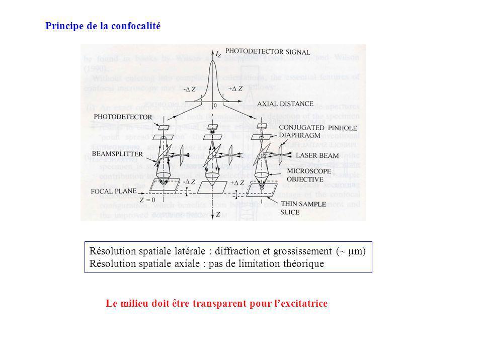 Principe de la confocalité Résolution spatiale latérale : diffraction et grossissement (~ µm) Résolution spatiale axiale : pas de limitation théorique Le milieu doit être transparent pour lexcitatrice