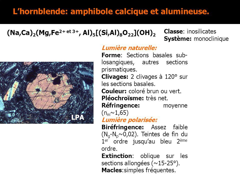 Lhornblende: amphibole calcique et alumineuse. (Na,Ca) 2 (Mg,Fe 2+ et 3+, Al) 5 [(Si,Al) 8 O 22 ](OH) 2 Lumière naturelle: Forme: Sections basales sub