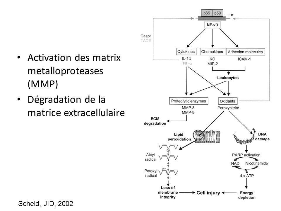 Activation des matrix metalloproteases (MMP) Dégradation de la matrice extracellulaire Scheld, JID, 2002