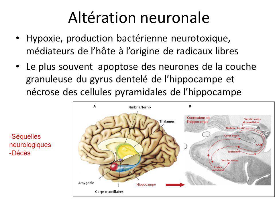 Altération neuronale Hypoxie, production bactérienne neurotoxique, médiateurs de lhôte à lorigine de radicaux libres Le plus souvent apoptose des neur