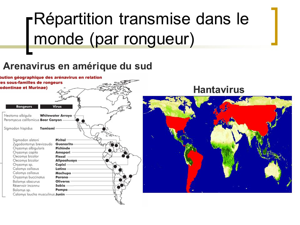 Répartition des filovirus Ebola Marbrug