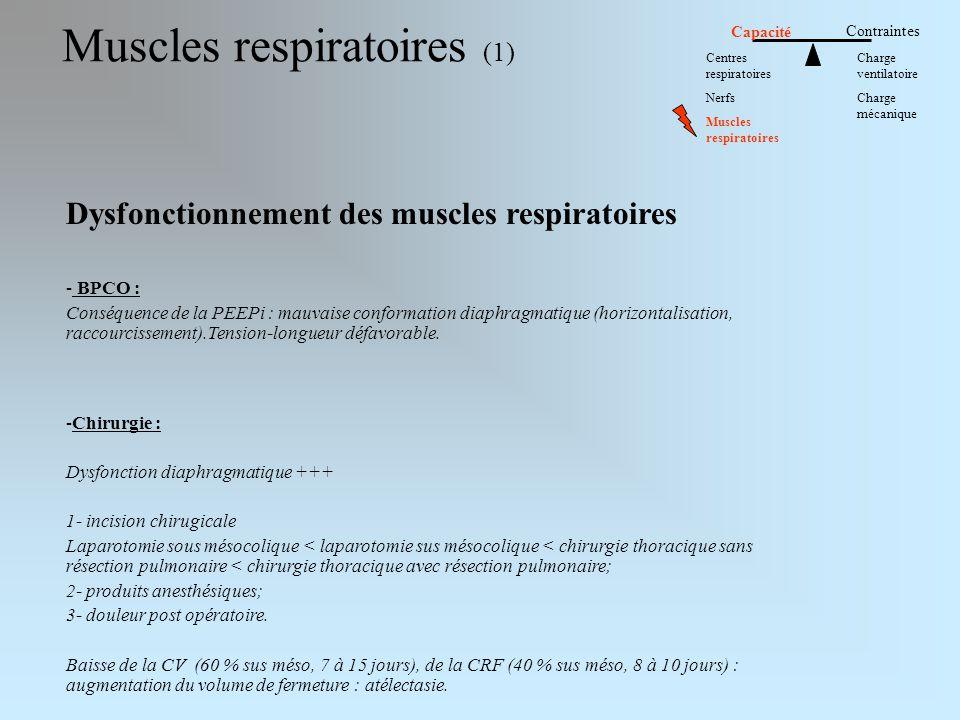 Muscles respiratoires (1) Dysfonctionnement des muscles respiratoires - BPCO : Conséquence de la PEEPi : mauvaise conformation diaphragmatique (horizontalisation, raccourcissement).Tension-longueur défavorable.