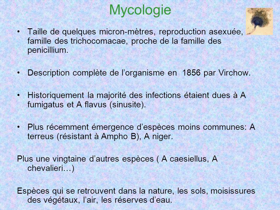 Mycologie Taille de quelques micron-mètres, reproduction asexuée, famille des trichocomacae, proche de la famille des penicillium. Description complèt