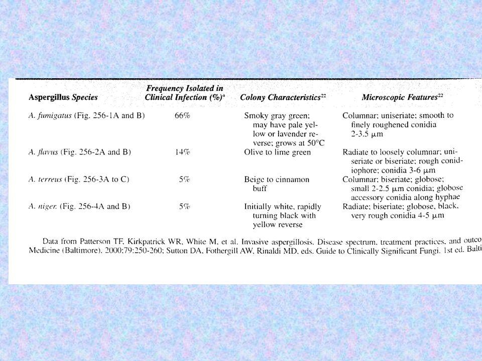 Epidémiologie Inhalation conduit à une colonisation ORL et pulmonaire.