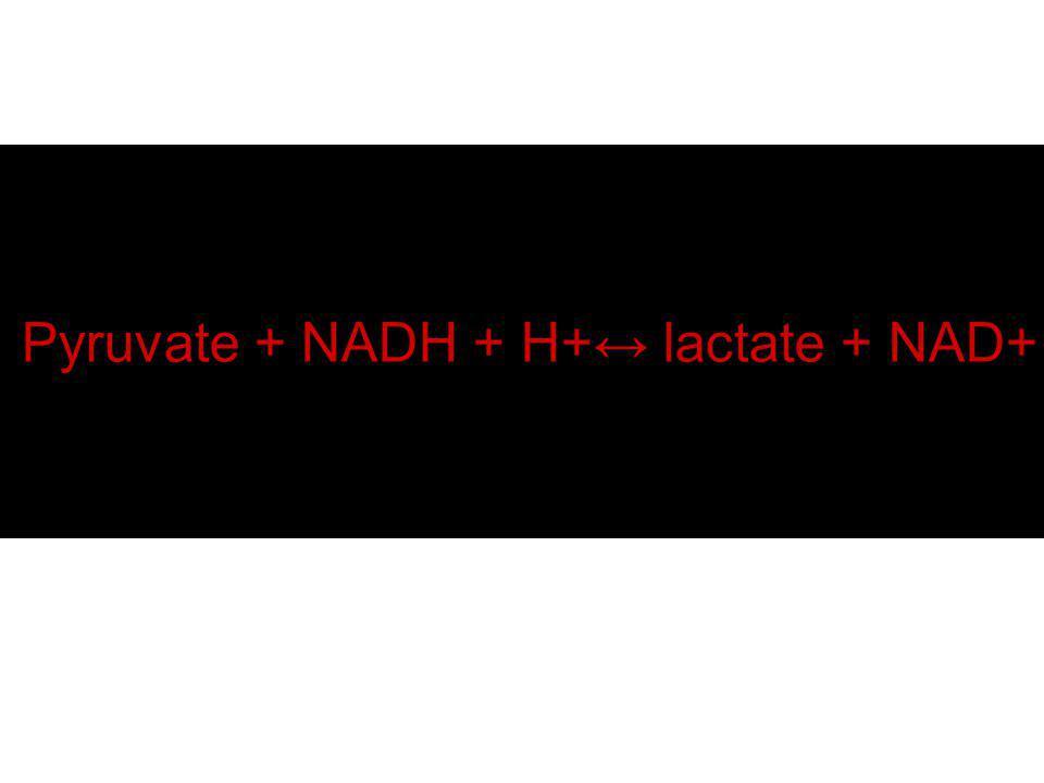 Pyruvate + NADH + H+ lactate + NAD+