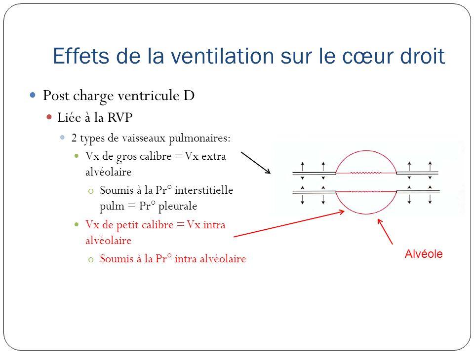 Effets de la ventilation sur le cœur droit Post charge ventricule D Liée à la RVP 2 types de vaisseaux pulmonaires: Vx de gros calibre = Vx extra alvéolaire oSoumis à la Pr° interstitielle pulm = Pr° pleurale Vx de petit calibre = Vx intra alvéolaire oSoumis à la Pr° intra alvéolaire Alvéole