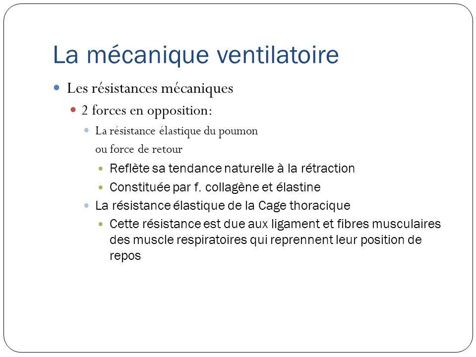 La mécanique ventilatoire En VS, au repos: Les muscles respiratoires sont au repos.