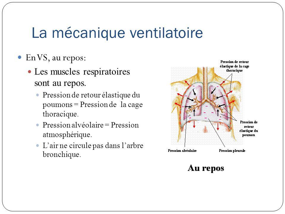 La mécanique ventilatoire En VS, à linspiration Contraction des M.