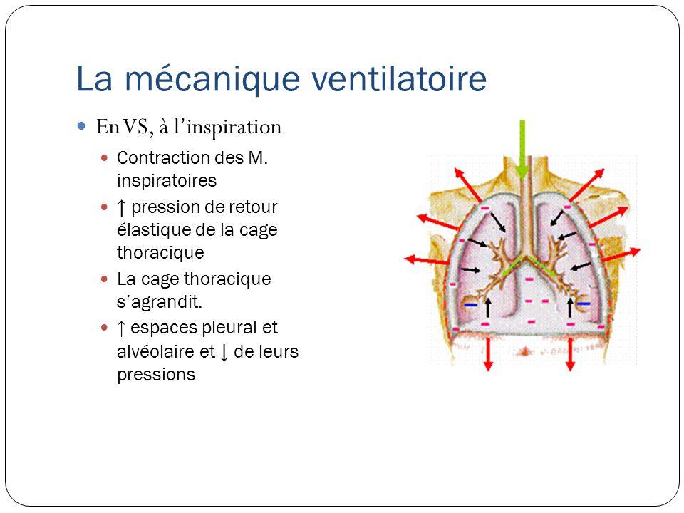 P0P0 P0P0 P0P0 P -5cmH2O p = 0 p = -5cmH 2 O La mécanique ventilatoire En VS, à linspiration La pression alvéolaire devient subatmosphérique Lair pénètre dans le poumon.