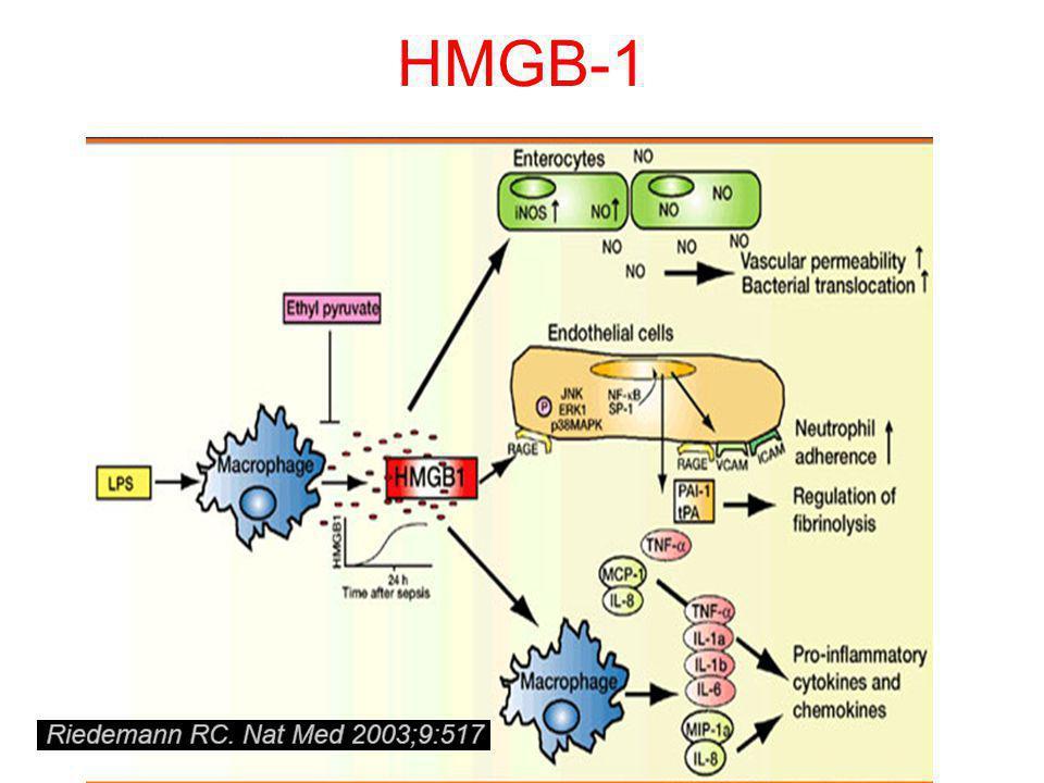 HMGB-1