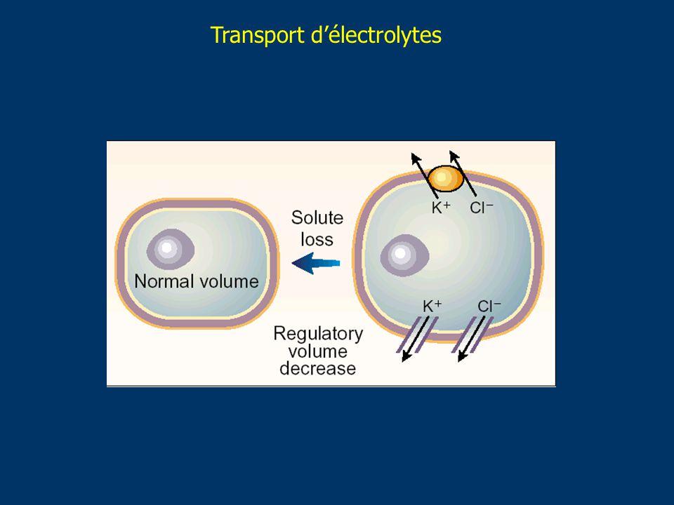 Transport délectrolytes