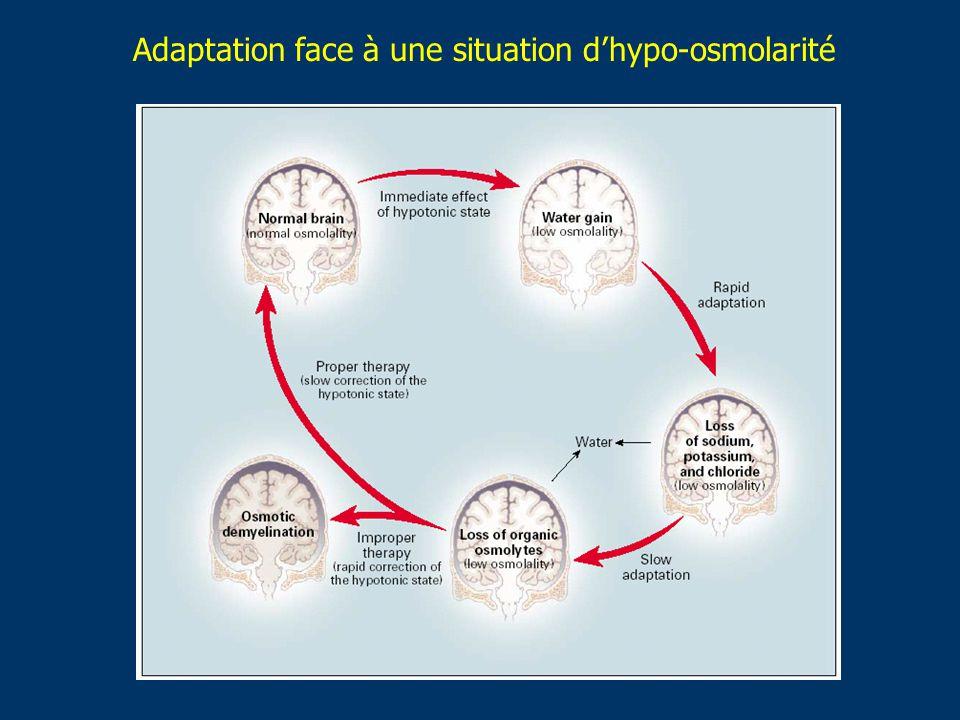 Adaptation face à une situation dhypo-osmolarité
