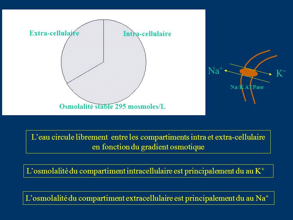 Intra-cellulaire Extra-cellulaire Osmolalité stable 295 mosmoles/L Leau circule librement entre les compartiments intra et extra-cellulaire en fonctio