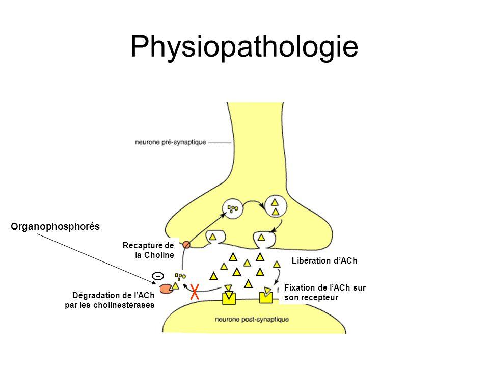 Physiopathologie Libération dACh Fixation de lACh sur son recepteur Dégradation de lACh par les cholinestérases Recapture de la Choline Organophosphorés