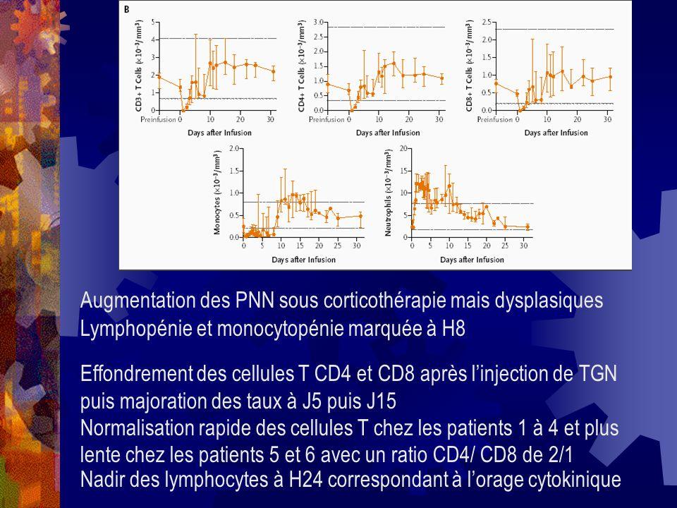Augmentation des PNN sous corticothérapie mais dysplasiques Lymphopénie et monocytopénie marquée à H8 Effondrement des cellules T CD4 et CD8 après lin