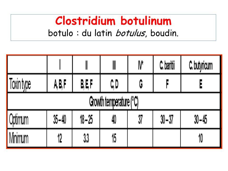 Clostridium botulinum botulo : du latin botulus, boudin.