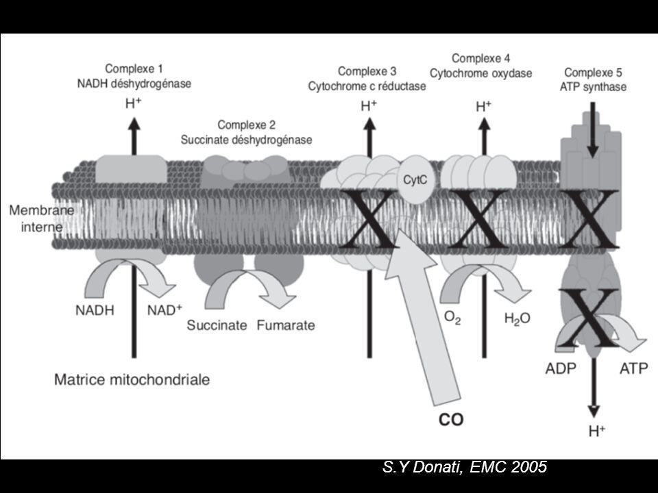 Mécanisme de la toxicité du CO Lors de la réoxygénation: radicaux libres oxygénés péroxydation lipidique lésions neuronales Sensibilités des cellules neuronales à lhypoxie: –Lésions nécrotiques multifocales –Démyélinisation