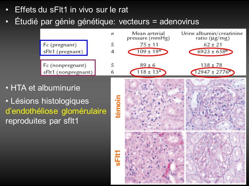 Effets du sFlt1 in vivo sur le rat Étudié par génie génétique: vecteurs = adenovirus HTA et albuminurie Lésions histologiques dendothéliose glomérulai