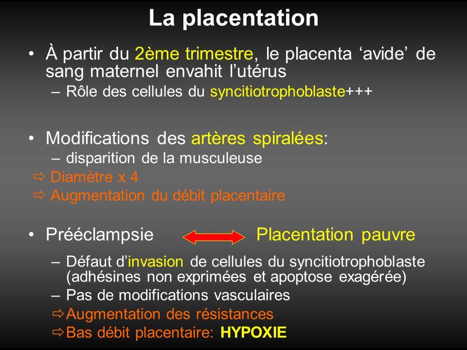 La placentation À partir du 2ème trimestre, le placenta avide de sang maternel envahit lutérus –Rôle des cellules du syncitiotrophoblaste+++ Modificat