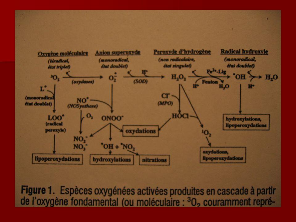 ROS Augmentation de production quand: Augmentation de production quand: –Inflammation aigue –Hypoxie –Hyperoxie –Ischémie/reperfusion (xanthine, NADPH) –Hémoglobine libre (peroxydase) ROS interviennent dans la signalisation intracellulaire : ROS interviennent dans la signalisation intracellulaire : –Facteurs de transcription nucléaire –Cascades de protéine kinase.