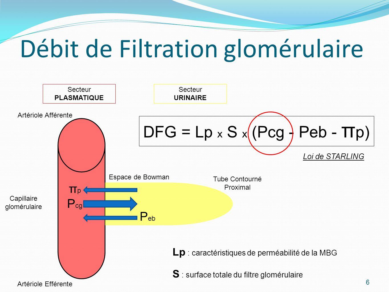 6 Artériole Afférente Capillaire glomérulaire Artériole Efférente Tube Contourné Proximal Secteur PLASMATIQUE Secteur URINAIRE πpπp P cg P eb Espace de Bowman DFG = Lp x S x (Pcg - Peb - π p) Débit de Filtration glomérulaire Lp : caractéristiques de perméabilité de la MBG S : surface totale du filtre glomérulaire Loi de STARLING
