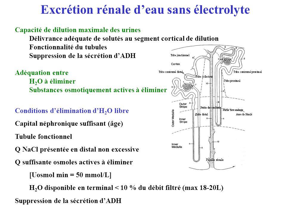 Excrétion rénale deau sans électrolyte Capacité de dilution maximale des urines Délivrance adéquate de solutés au segment cortical de dilution Fonctio