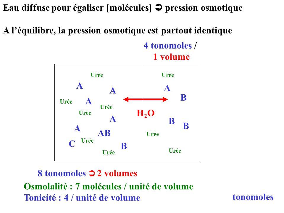Eau diffuse pour égaliser [molécules] pression osmotique A léquilibre, la pression osmotique est partout identique tonomoles A AB A A B B B B C A A A