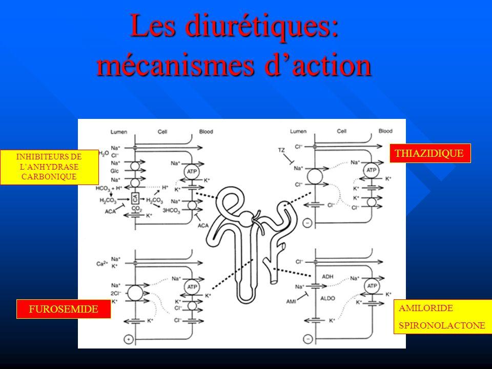 Les diurétiques: mécanismes daction THIAZIDIQUE FUROSEMIDE AMILORIDE SPIRONOLACTONE INHIBITEURS DE LANHYDRASE CARBONIQUE
