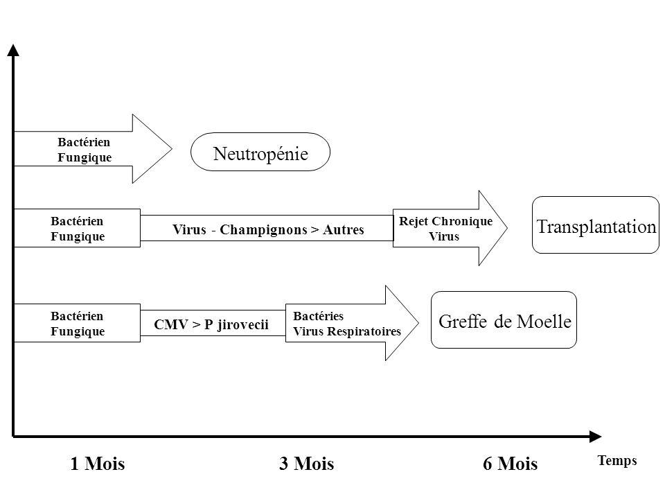 Bactérien Fungique Neutropénie Bactérien Fungique Bactérien Fungique Rejet Chronique Virus Transplantation Greffe de Moelle Virus - Champignons > Autres CMV > Pjirovecii Bactéries Virus Respiratoires Temps 1 Mois3 Mois6 Mois
