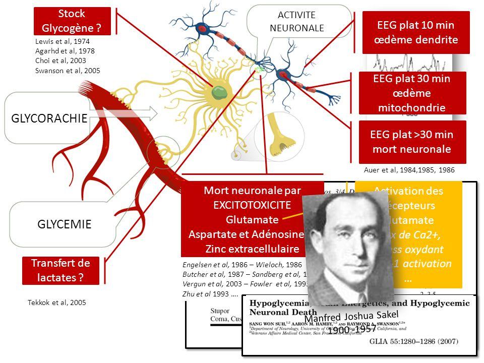 ACTIVITE NEURONALE GLYCORACHIE GLYCEMIE 25 mg/dl à 2 mg/dl Stock Glycogène ? Lewis et al, 1974 Agarhd et al, 1978 Choi et al, 2003 Swanson et al, 2005