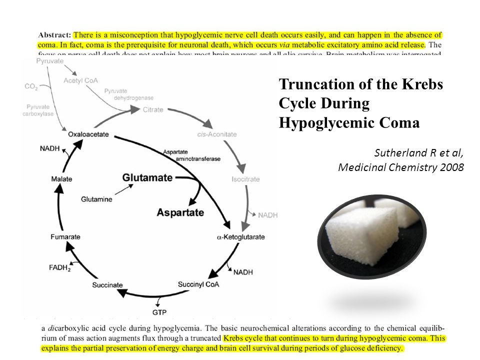 Truncation of the Krebs Cycle During Hypoglycemic Coma Sutherland R et al, Medicinal Chemistry 2008