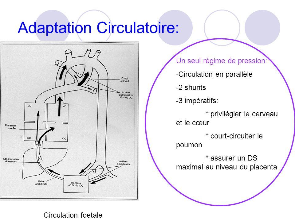 Adaptation Circulatoire: Circulation foetale Un seul régime de pression: -Circulation en parallèle -2 shunts -3 impératifs: * privilégier le cerveau et le cœur * court-circuiter le poumon * assurer un DS maximal au niveau du placenta