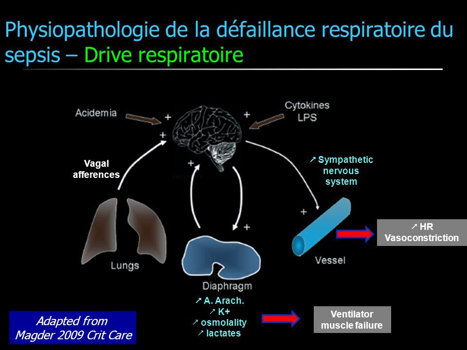 Physiopathologie de la défaillance respiratoire du sepsis – Drive respiratoire Vagal afferences A. Arach. K+ osmolality lactates Ventilator muscle fai
