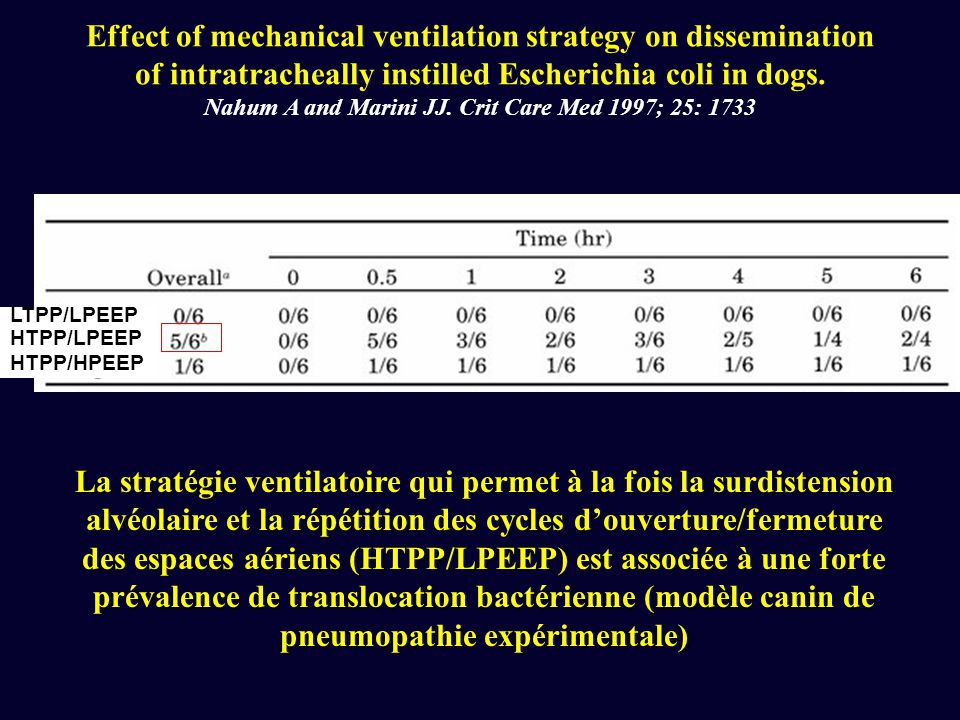 Effect of mechanical ventilation strategy on dissemination of intratracheally instilled Escherichia coli in dogs.