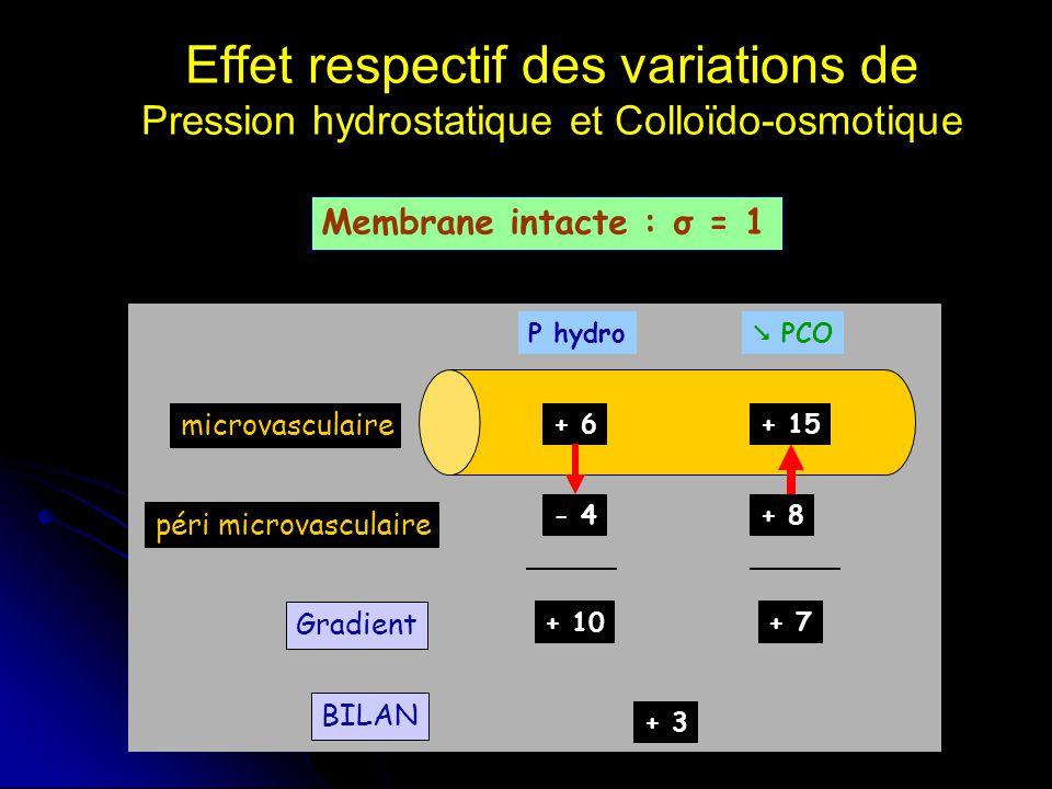 Effet respectif des variations de Pression hydrostatique et Colloïdo-osmotique Membrane intacte : σ = 1 microvasculaire péri microvasculaire Gradient