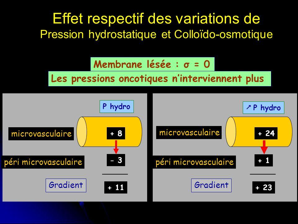 Effet respectif des variations de Pression hydrostatique et Colloïdo-osmotique Membrane lésée : σ = 0 microvasculaire péri microvasculaire Gradient P