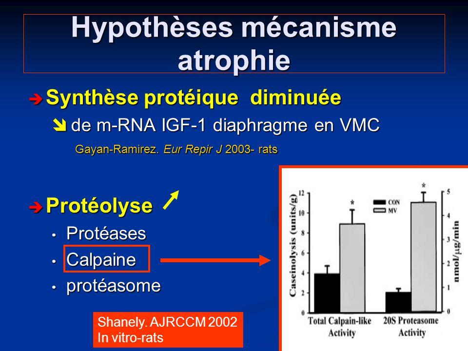 Hypothèses mécanisme atrophie Synthèse protéique diminuée Synthèse protéique diminuée de m-RNA IGF-1 diaphragme en VMC Gayan-Ramirez. Eur Repir J 2003