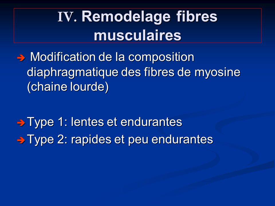 IV. Remodelage fibres musculaires Modification de la composition diaphragmatique des fibres de myosine (chaine lourde) Modification de la composition