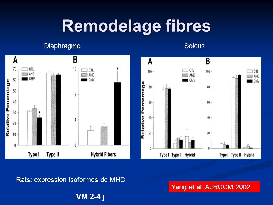 Remodelage fibres Yang et al. AJRCCM 2002 Rats: expression isoformes de MHC Diaphragme VM 2-4 j Soleus