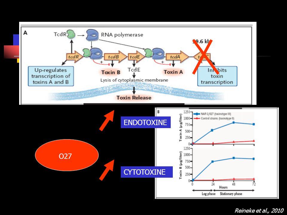 Reineke et al., 2010 ENDOTOXINE CYTOTOXINE O27