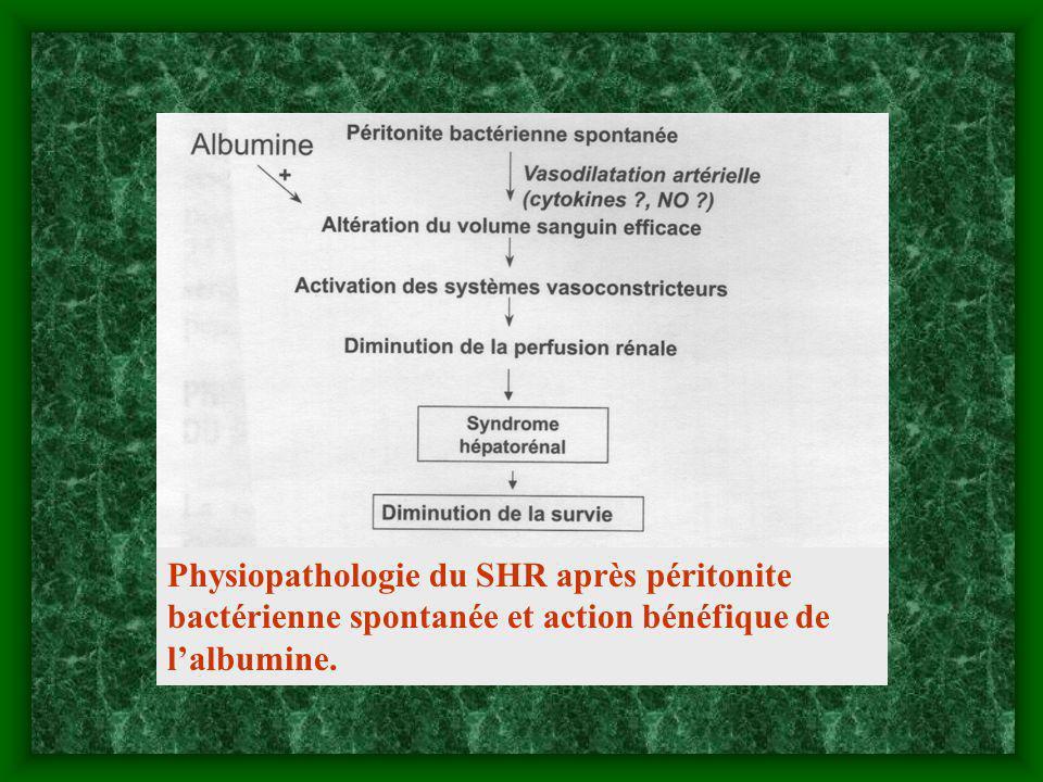 Physiopathologie du SHR après péritonite bactérienne spontanée et action bénéfique de lalbumine.