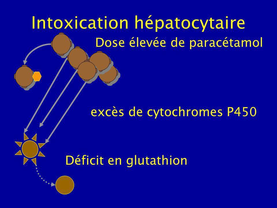 Intoxication hépatocytaire Déficit en glutathion Dose élevée de paracétamol excès de cytochromes P450