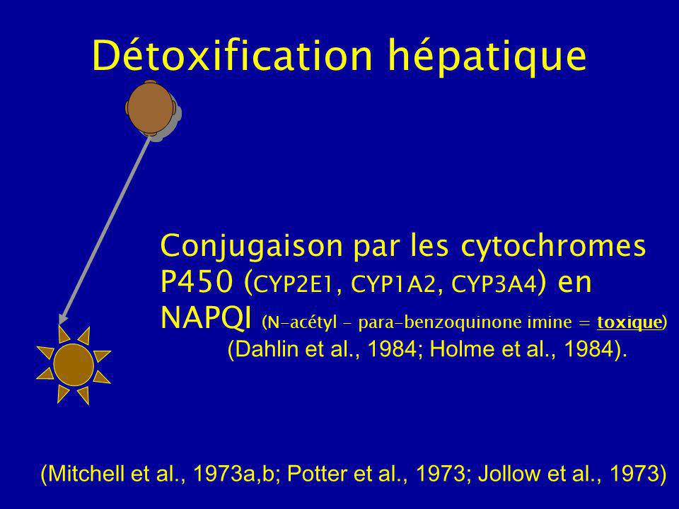 Détoxification hépatique Conjugaison par les cytochromes P450 ( CYP2E1, CYP1A2, CYP3A4 ) en NAPQI (N-acétyl - para-benzoquinone imine = toxique) (Mitchell et al., 1973a,b; Potter et al., 1973; Jollow et al., 1973) (Dahlin et al., 1984; Holme et al., 1984).