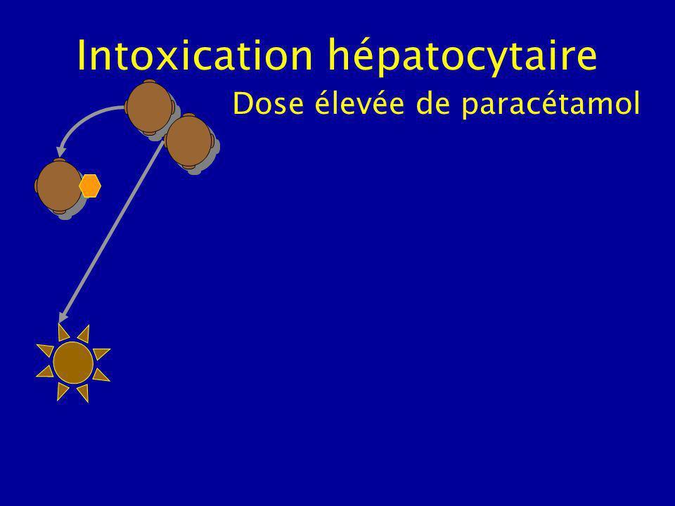 Intoxication hépatocytaire Dose élevée de paracétamol