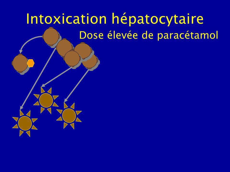 Intoxication hépatocytaire excès de cytochromes P450