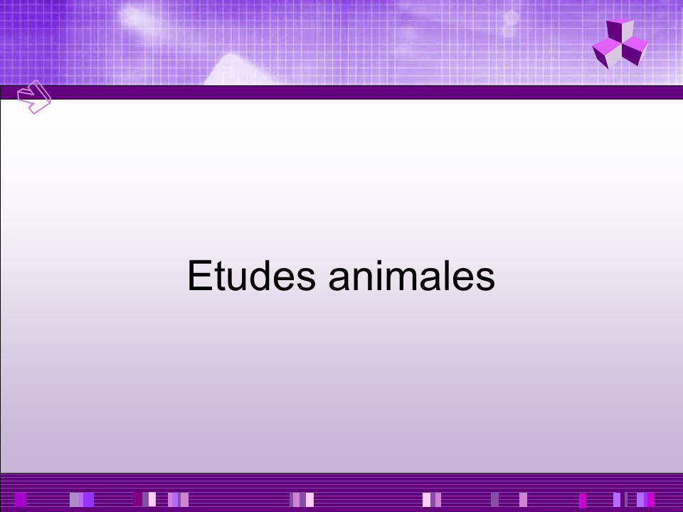 Etudes animales