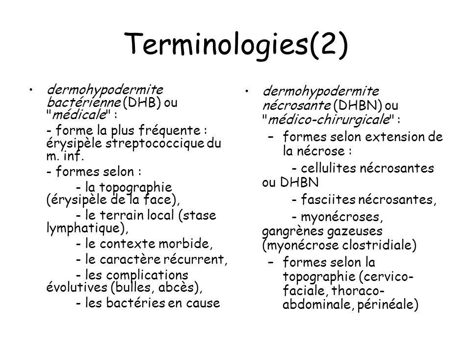 Terminologies(2) dermohypodermite bactérienne (DHB) ou médicale : - forme la plus fréquente : érysipèle streptococcique du m.