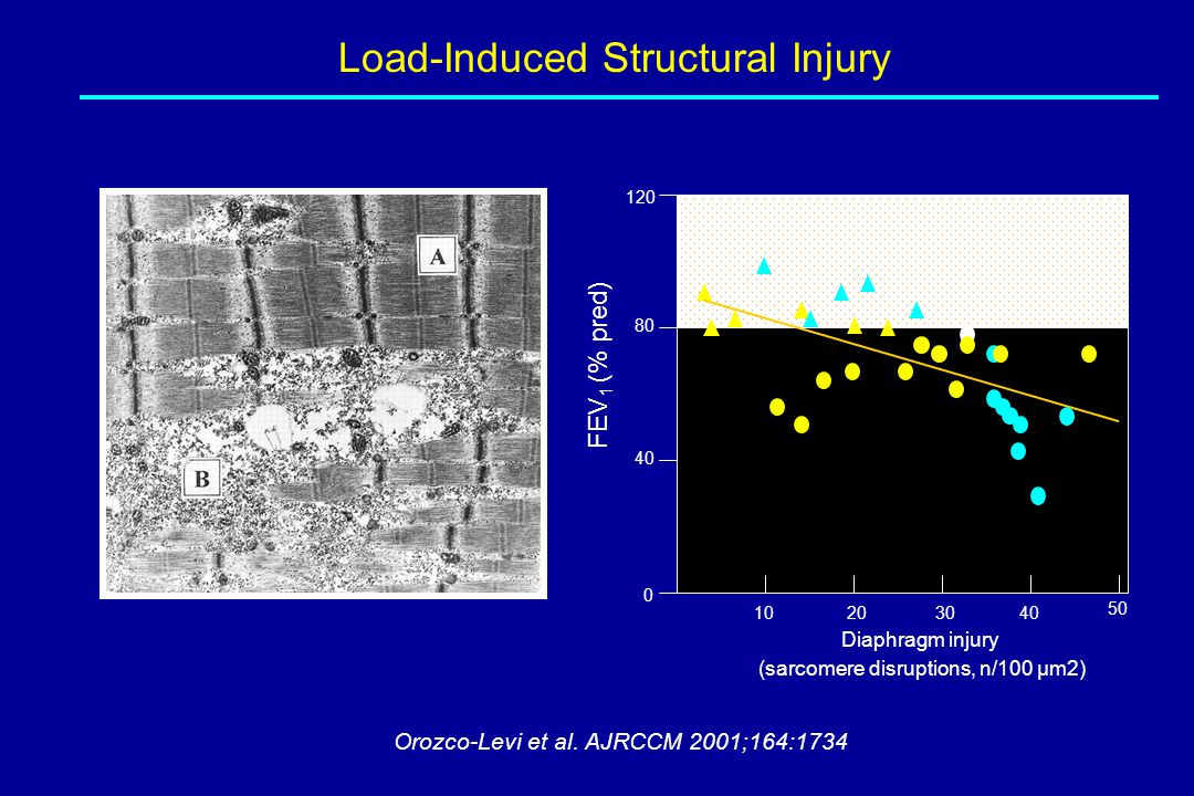 Load-Induced Structural Injury Orozco-Levi et al. AJRCCM 2001;164:1734 Diaphragm injury (sarcomere disruptions, n/100 µm2) 10203040 FEV 1 (% pred) 50