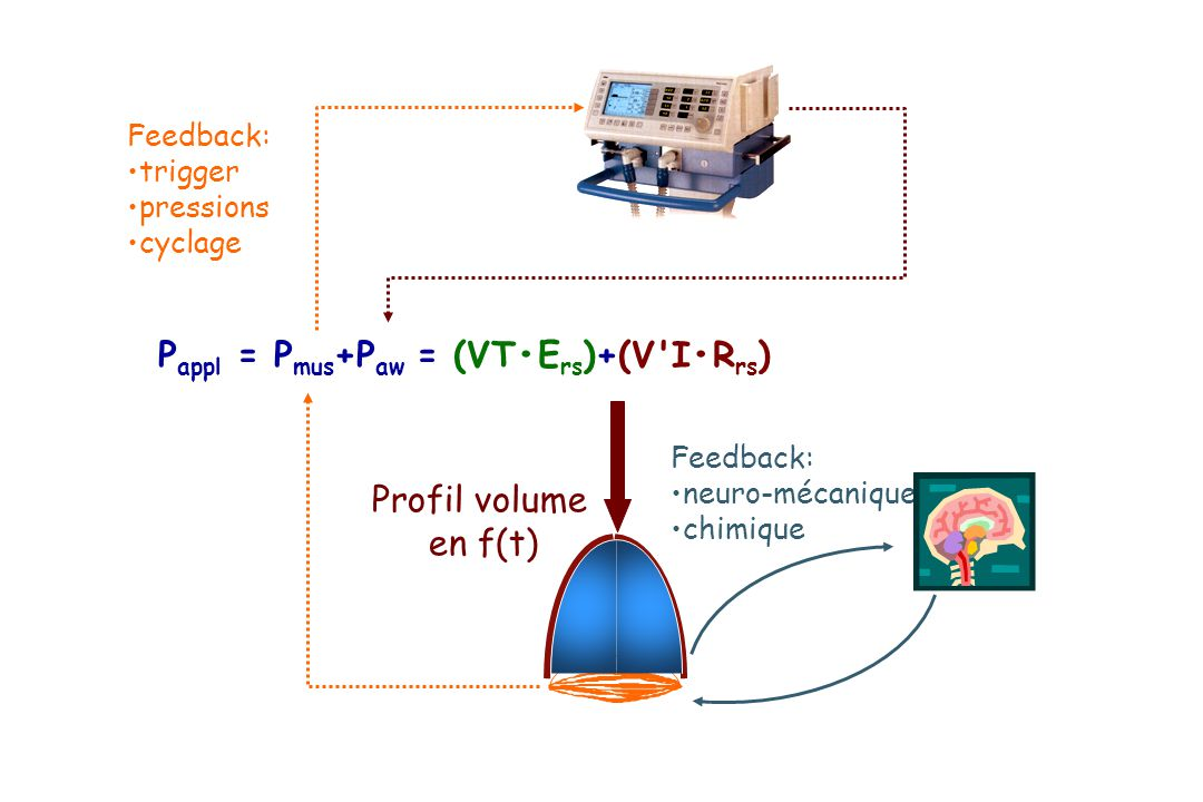 P appl = P mus +P aw = (VTE rs )+(V'IR rs ) Feedback: neuro-mécanique chimique Feedback: trigger pressions cyclage Profil volume en f(t)